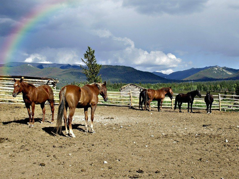 Horse-back-riding-tips-Estes-Park-Vacation