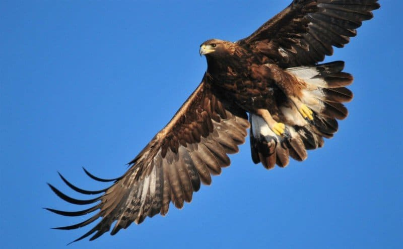 the golden eagle_estes park vacations